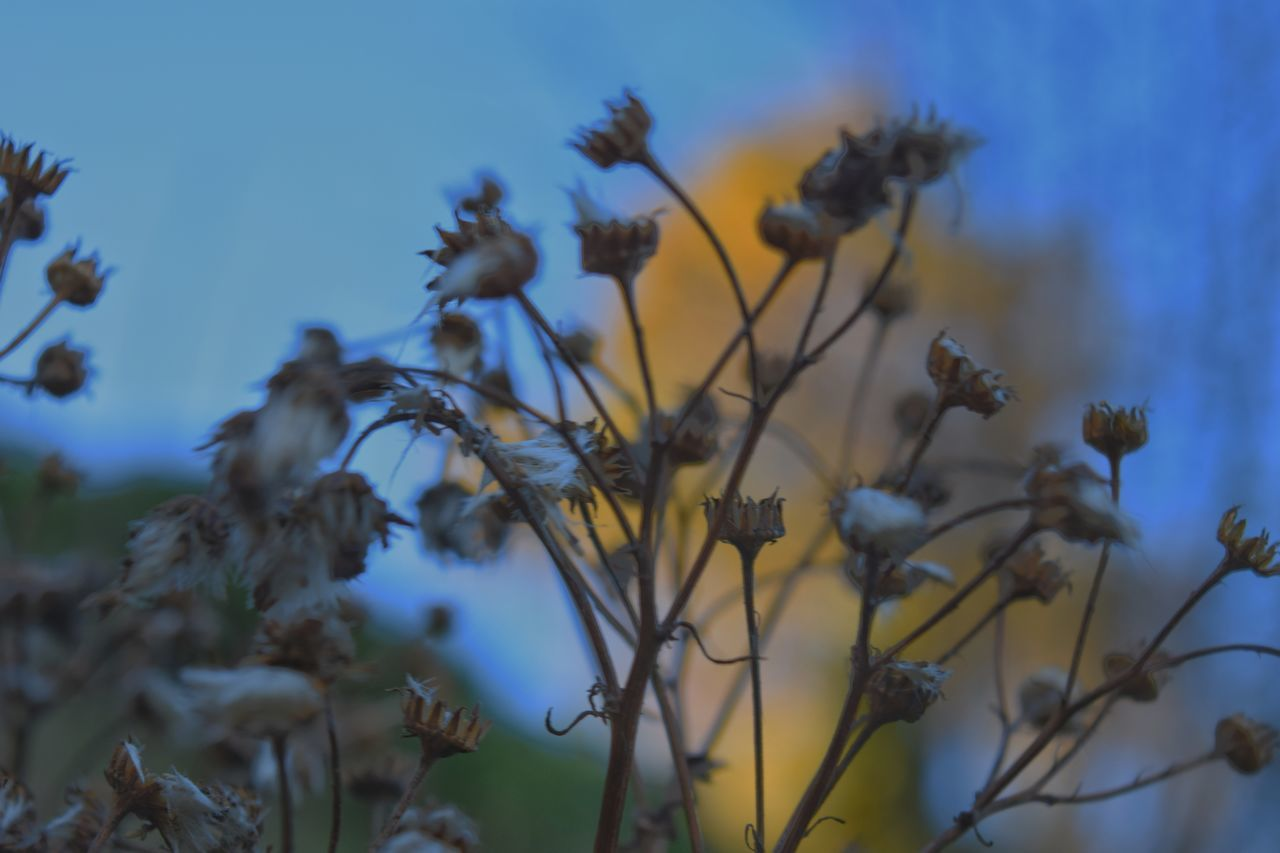 Close-Up Of Dry Plant At Dusk