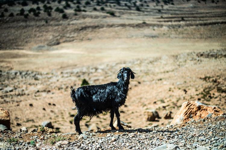 Black dog standing on landscape