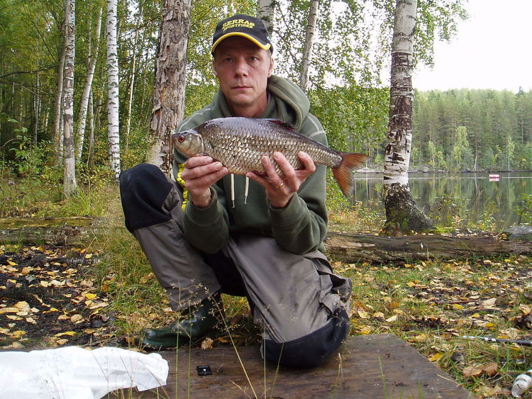 Sportfishing Coarse Fishing Big Roach Roach Fish Big Fish One In A Life Time Middle Of Sweden Norrland Ljusnan  Drennan Traper Groundbait Catch And Release Hälsingland