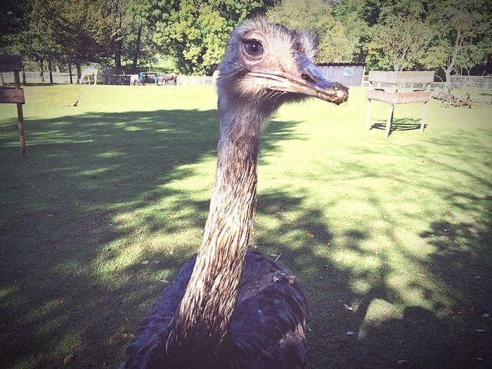 Vogelpark Schotten First Eyeem Photo