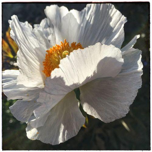 Flower Delicate