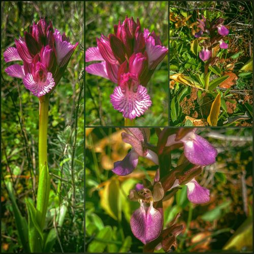 Flores Orquídeas Y Limones Linares Jaen Province Andalucia Spain Invierno Andalucia, Spain