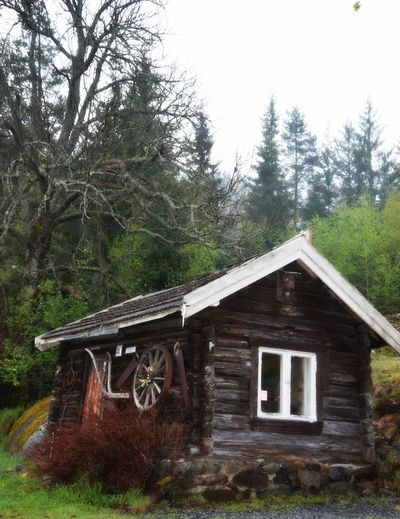 Architecture Built Structure Cabin Litle House Norwegianhouse Oldhouselove Outdoors Tree