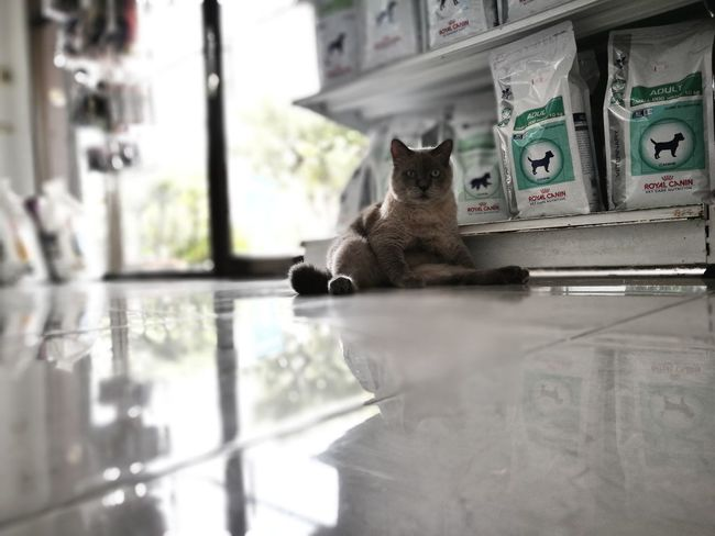 Cat Lazy Sitting One Animal Domestic Cat Animal Themes Pets Reflection Indoors  No People Domestic Animals Mammal Day