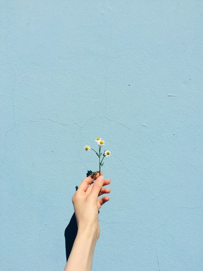 Low angle view of person hand holding flowering plant against wall