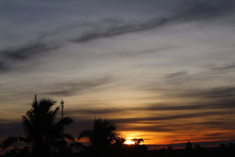 Sunset Sky Silhouette Cloud - Sky Palm Tree Beauty In Nature Tree Scenics Nature Tranquility Tranquil Scene No People Low Angle View Outdoors Day