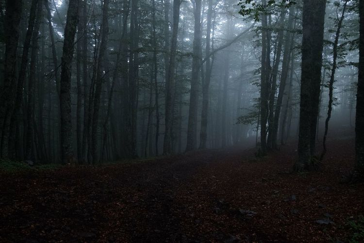 October mist EyeEmNewHere Melancholic Landscapes Moody Italy Mistyfoggymilkymoody Misterious Misty Landscape darkness and light Dark Photography Forest Tree Plant Land Fog WoodLand Tranquility Beauty In Nature Idyllic Autumn Landscape Scenics - Nature Non-urban Scene