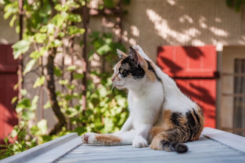 Animal Themes Cat Yoga Country Life Day Domestic Cat Feline Mammal Nature No People One Animal Outdoors Pets Relaxed Sitting