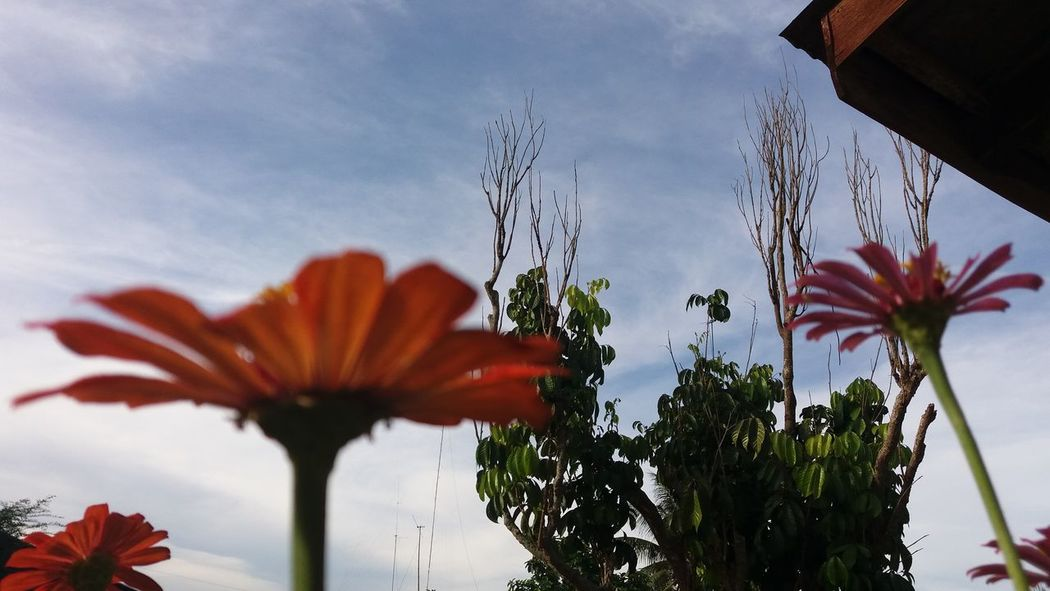Nature's beauty. Eyeemjourney Eyeem Philippines Eyeemphotography EyeEm Best Shots EyeEm Eye Em! Eyeemflowerlover Perspective Flowers