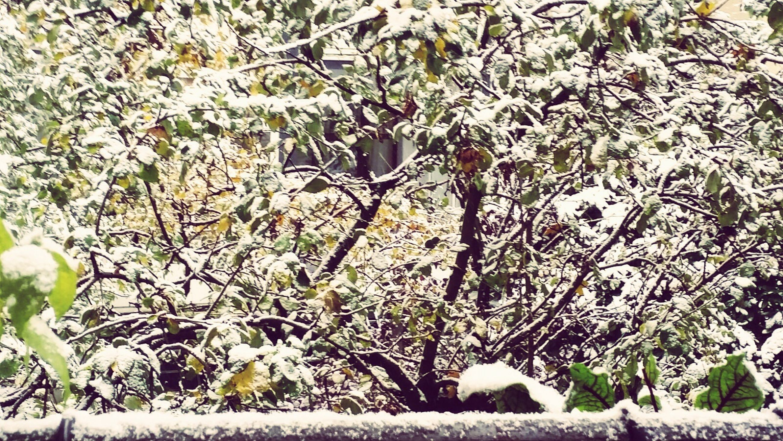 nature, tree, growth, no people, beauty in nature, low angle view, day, outdoors, cold temperature, winter, branch, backgrounds, snow, close-up