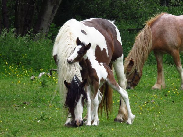 Horses Horse Animal Themes Domestic Animals Standing Mammal Full Length Front View Young Animal Animal Field Zoology Herbivorous Animal Head  Animal Behavior Nature Day Outdoors Livestock Green Color Animal Hair No People Animals