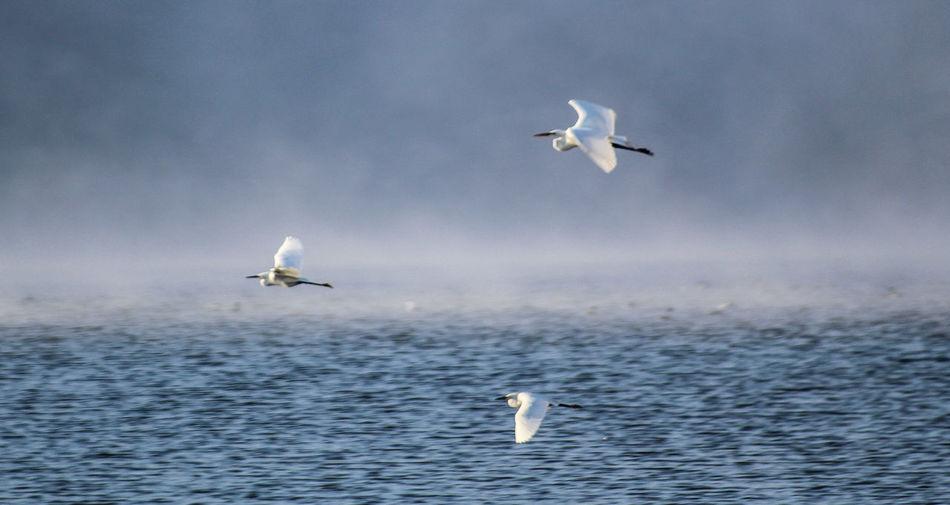 Lake Hodge Esconidido Lake Birds_collection Bird Photography Bird Crane Birds Blue Wave The Great Outdoors With Adobe Birds Eye View Color Palette
