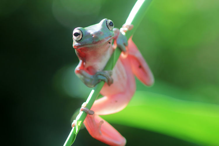 Close-up of frog on plant