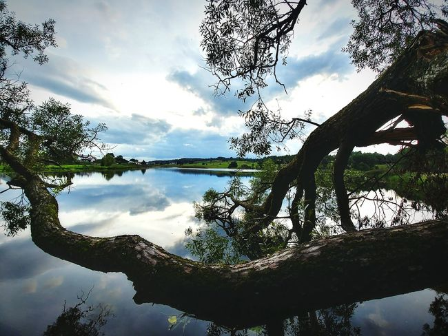 Lake and tree in the evening Reflection Lake Water Cloud - Sky Tree Sky Nature Silhouette Scenics Landscape Beauty In Nature Evening Contrast Calmness Relaxing Lithuania Lgg6