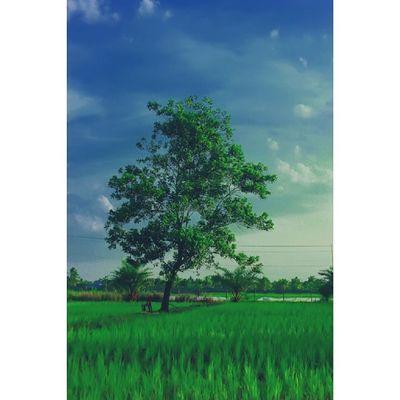 Pohon Tembilahan Inhil Riau pekanarba pictures photography instalike instapic
