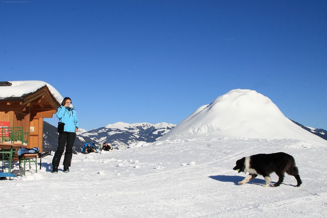 snow, pets, clear sky, full length, domestic animals, winter, real people, one animal, mammal, day, outdoors, cold temperature, walking, sunlight, blue, leisure activity, mountain, nature, dog, two people, adventure, standing, lifestyles, men, beauty in nature, sky