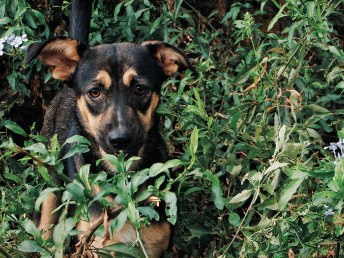 Portrait of dog standing amidst plants