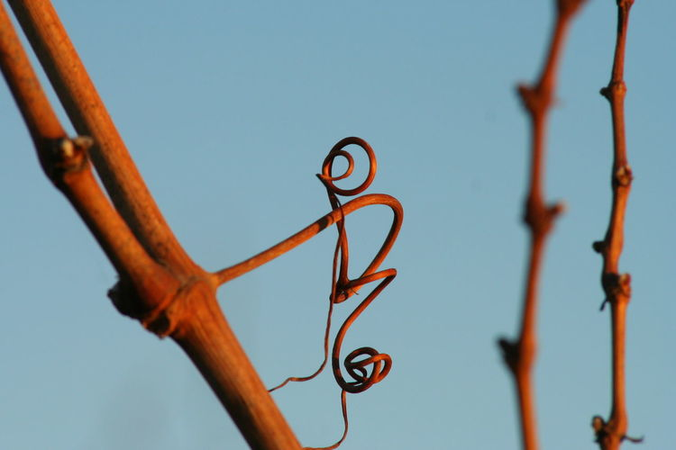 Low angle view of twigs against clear blue sky