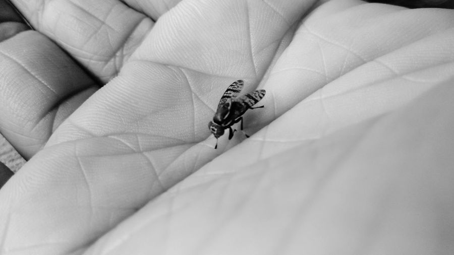 hand and fruit fly Black And White Skin Finger Closeup Animal Insect Close-up Damselfly Animal Wing