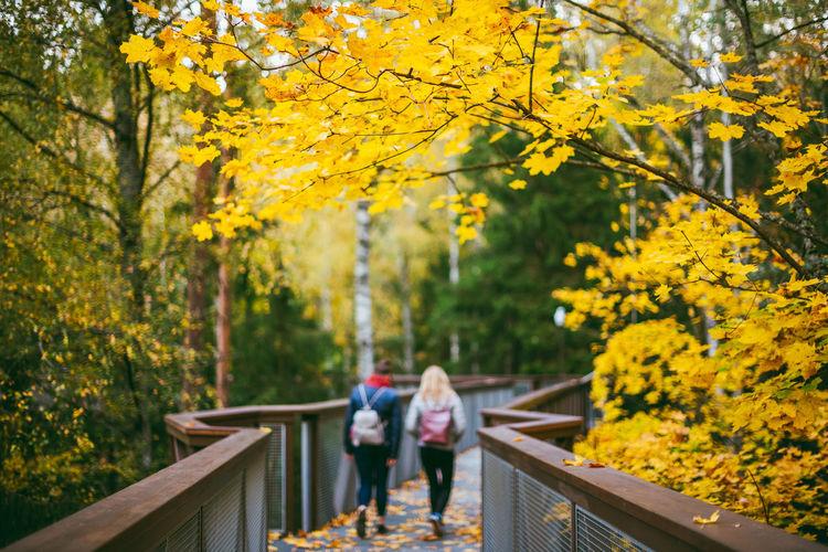 Rear view of female friends on footbridge amidst autumn trees