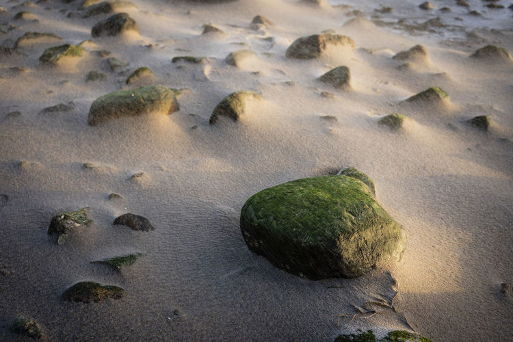Beach Land No People Rock Nature Solid Water Beach Rock - Object Sand Sea Animal Wildlife Animals In The Wild Day Environment Animal High Angle View Animal Themes Underwater Beauty In Nature Outdoors Herd Pebble