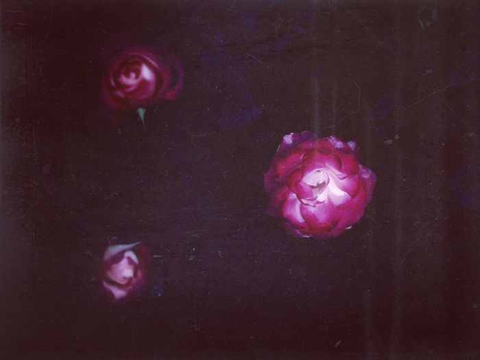 Nightgardens Rosengarten Three Roses In The Dark Afterglow Red Roses