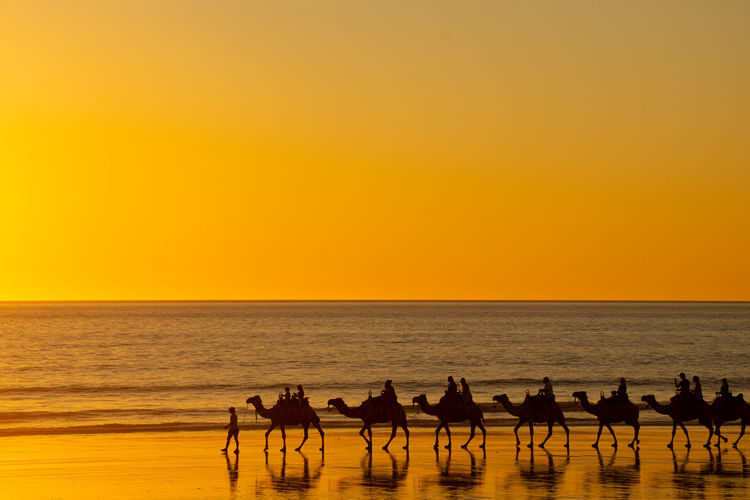 Silhouette camels on beach against sky during sunset