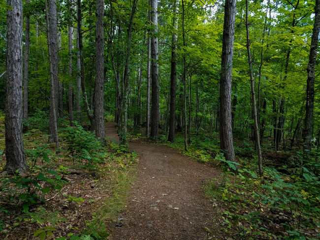 Green Color Tree Growth Nature Forest Beauty In Nature Grass No People Day Outdoors Woods Path Trail State Park  State Forest Fall Minnesota Nature Photography Green Forest Photography ExploreFreshness Trees Dirt Trail Hiking The Great Outdoors - 2018 EyeEm Awards