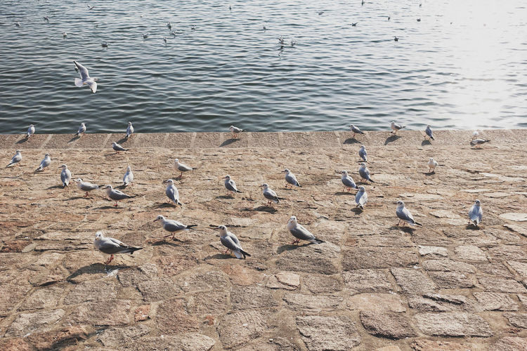 High angle view of seagulls perching on the lake