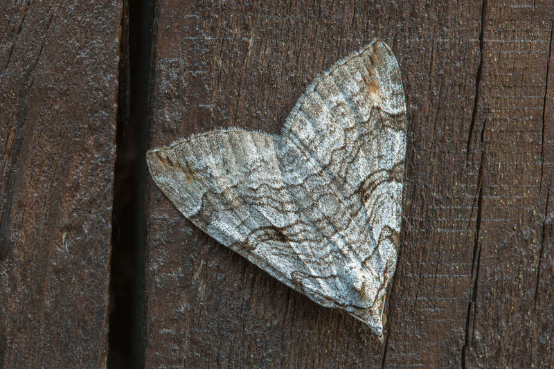 High angle view of butterfly on dry leaf