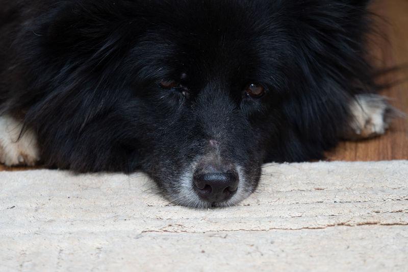 Close-up of dog lying on floor