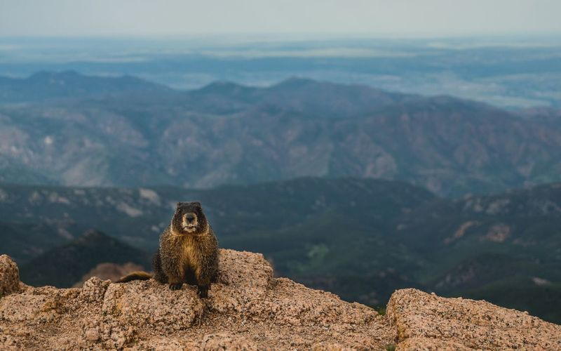 Mountain One Animal Colorado Pikes Peak Animal Wildlife Nature Outdoors No People Scenics Beauty In Nature Landscape Rock Hills Daytime EyeEmNewHere The Great Outdoors - 2017 EyeEm Awards