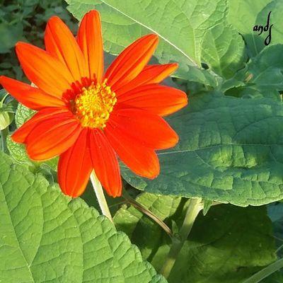 A Natureza 🐦🌳 e bela mas com ela temos essa linda flore Mexico MNDS Mumuzinho First Eyeem Photo Instagram Secret Garden Curti Ai Foto flores dedico a todas as mulhes