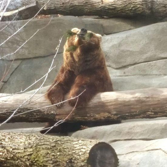 Teddy Bear Wannabe Homeschool :)
