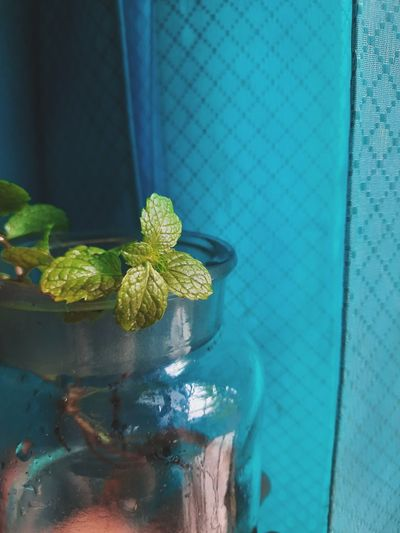 Close-up of potted plant on glass wall