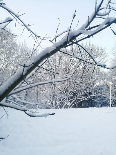winters morning Snow Winter Cold Temperature Frozen Nature Outdoors Tranquility