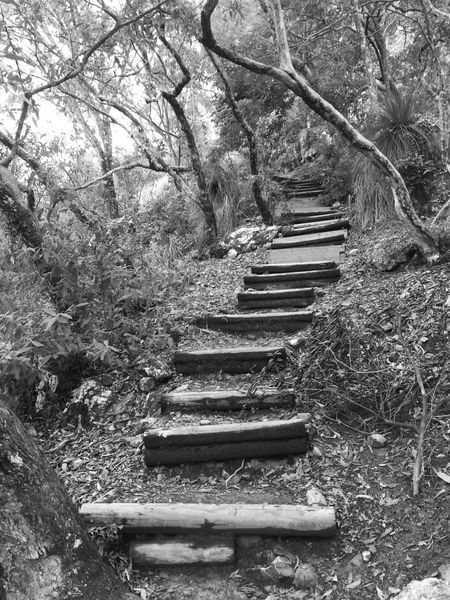 Stairway to Heaven Heaven Path Architecture Black And White Branch Built Structure Climbing Day Direction Forest Growth Land Nature No People Old Outdoors Park Pathway, Where Will Your Foot Steps Take You? Plant Staircase Stairway To Heaven Steps And Staircases The Way Forward Tranquility Tree