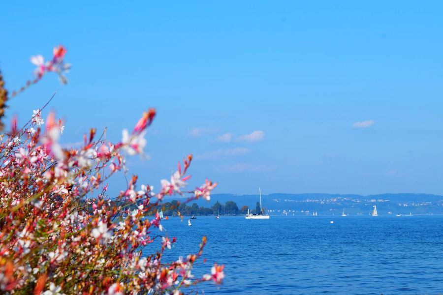 Thurgau Bodensee Beauty In Nature Blue Nature Sea No People Day Bodenseebilder Sky Water Outdoors Tree Nautical Vessel Bodensee Lake Bodensee Konstanz