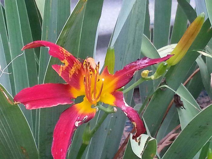 In The Garden Flower Porn Follow Me Bright No Filter Springntexas