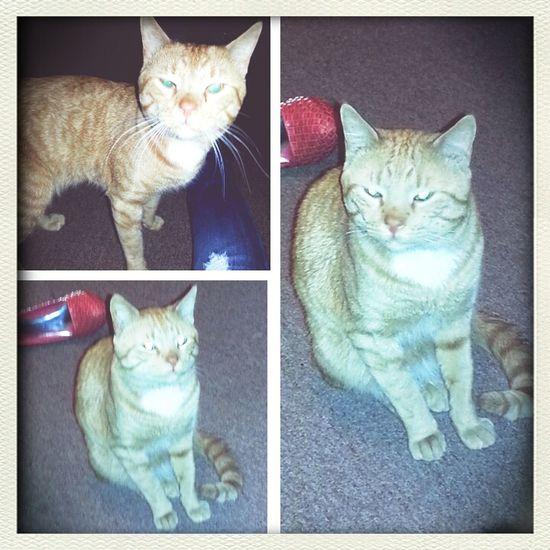 The most gangsta cat u can ever meet: #Gunna