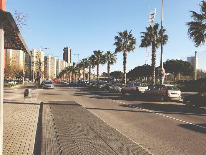 Barcelona Springtime Palm Tree Architecture City Street