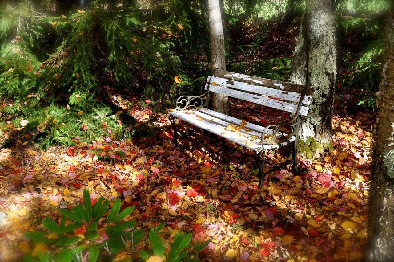 autumn, leaf, no people, water, nature, change, day, outdoors, tree, tranquility, beauty in nature