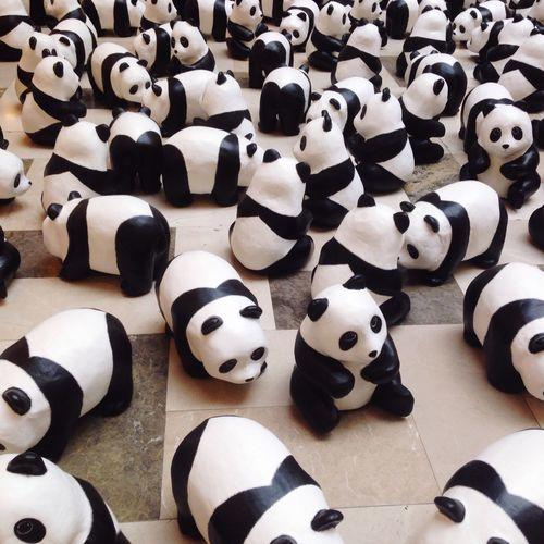 High angle view of panda toys on floor