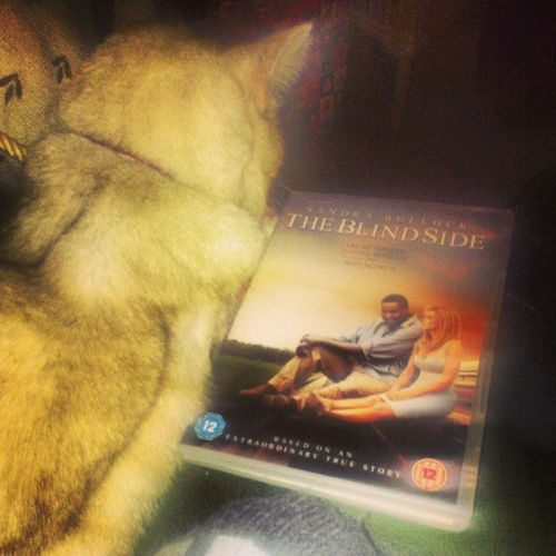 My night sorted. Cuddlewithkitty Blindside Love