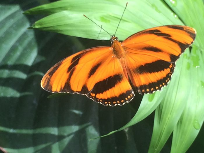 Beautiful Butterfly Animal Wildlife Beauty In Nature Butterfly Butterfly - Insect Close-up Insect Nature Orange Color Plant