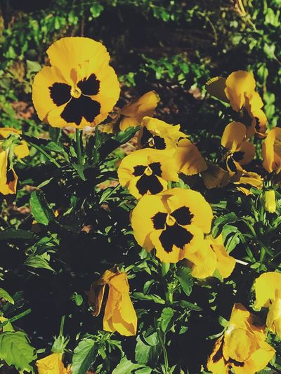 Beauty In Nature Flower Yellow Nature Growth Freshness Flower Head Petal Fragility Beauty In Nature Plant Outdoors Blooming Day No People Leaf Close-up
