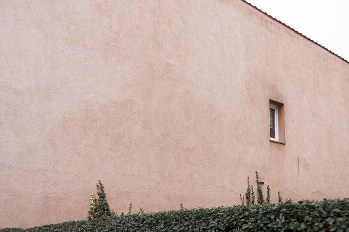 Building Composition Detail Exterior Hedge Rosé Simplicity Space Textured  Wall Wall - Building Feature Window