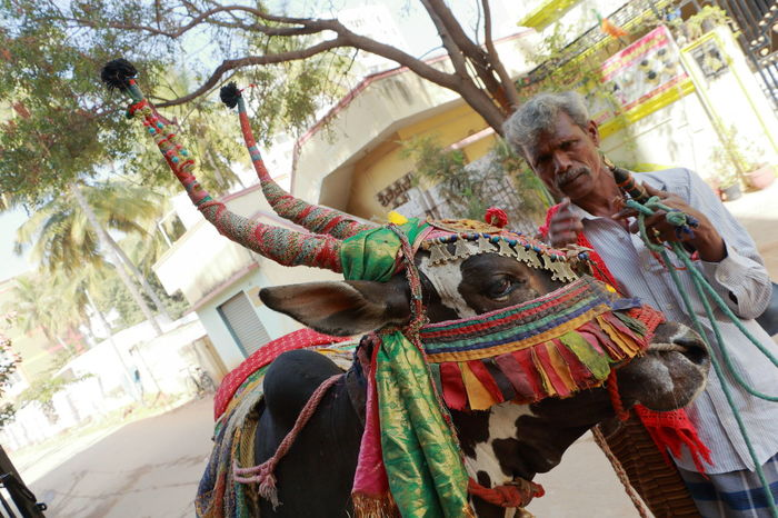 Street Glimpse Bangalore Colors India Street Colors Animal Themes Day Domestic Animals Lifestyles One Animal One Person Outdoors People Real People Street Street Photography Streetcollection Streetphotography Tree