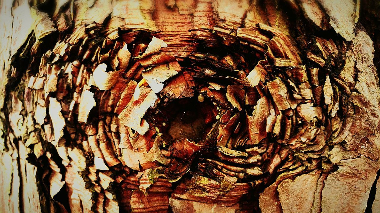tree trunk, textured, wood - material, tree, bark, rough, no people, nature, day, outdoors, tree stump, close-up, growth, knotted wood, pattern, backgrounds, tree ring, dead tree