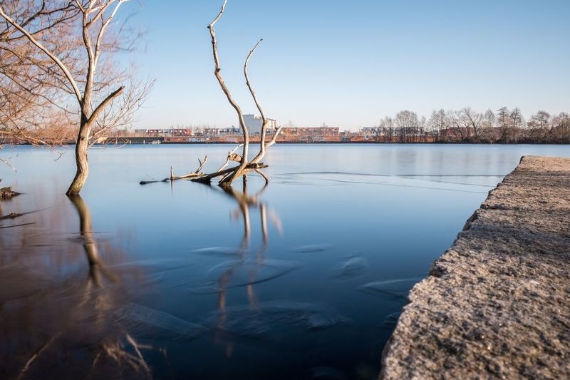 Reflection Of Bare Trees In Water Against Clear Sky